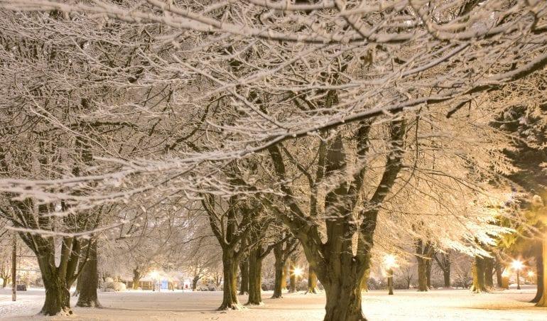 Fresh Snow in a City Park